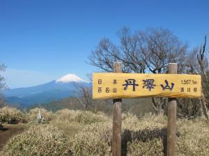 丹沢山からの富士