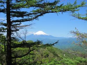 鍋割山稜からの富士